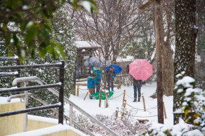 Read more about the article SNOW